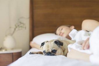 slapen met de hond